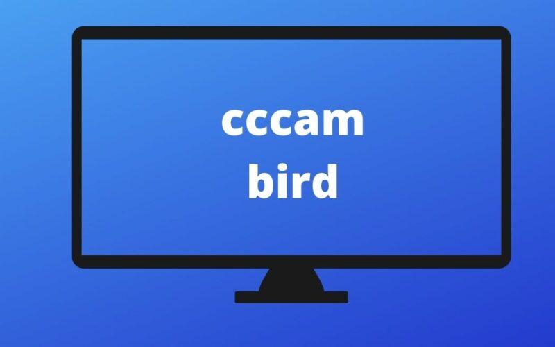 cccambird